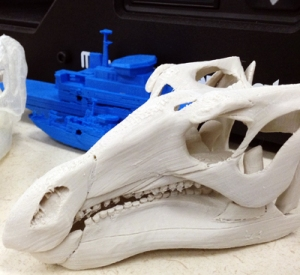 A 3D skull produced by the museum's digital printer.